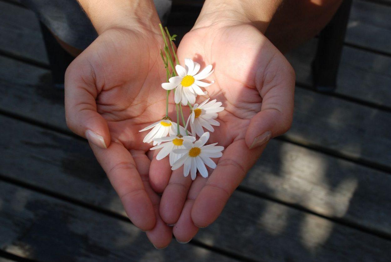 Photo de paumes de main remplies de marguerites pour illustrer cet article présentant 6 citations zens.