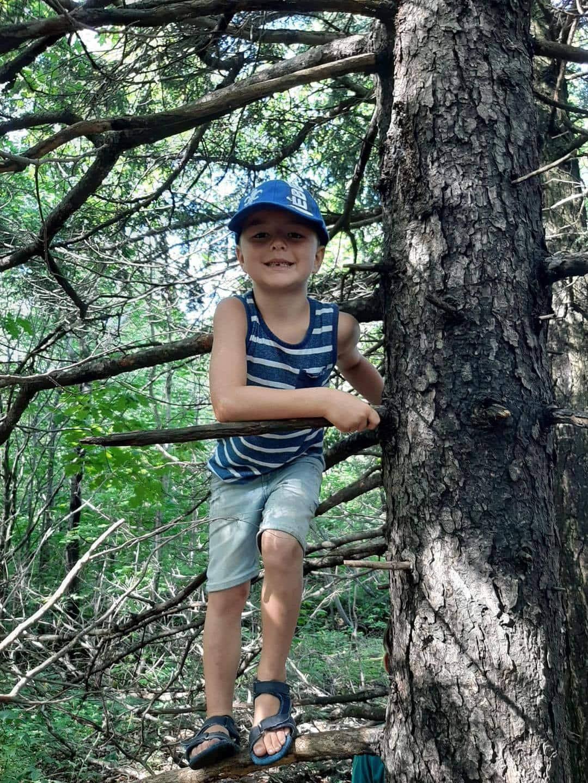 Enfant en nature grimpé à un arbre