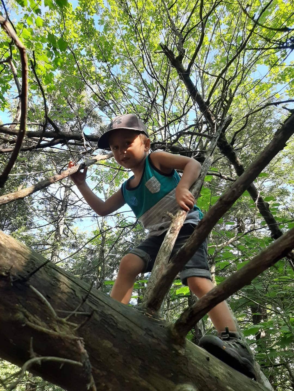 Enfant en nature marchant sur un arbre