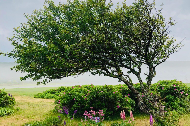 Photo d'un arbre encerclé de fleurs et d'un petit chemin menant vers une source d'eau pour illustrer cet article sur l' écosophie. Crédit photo: Nadie Ostiguy