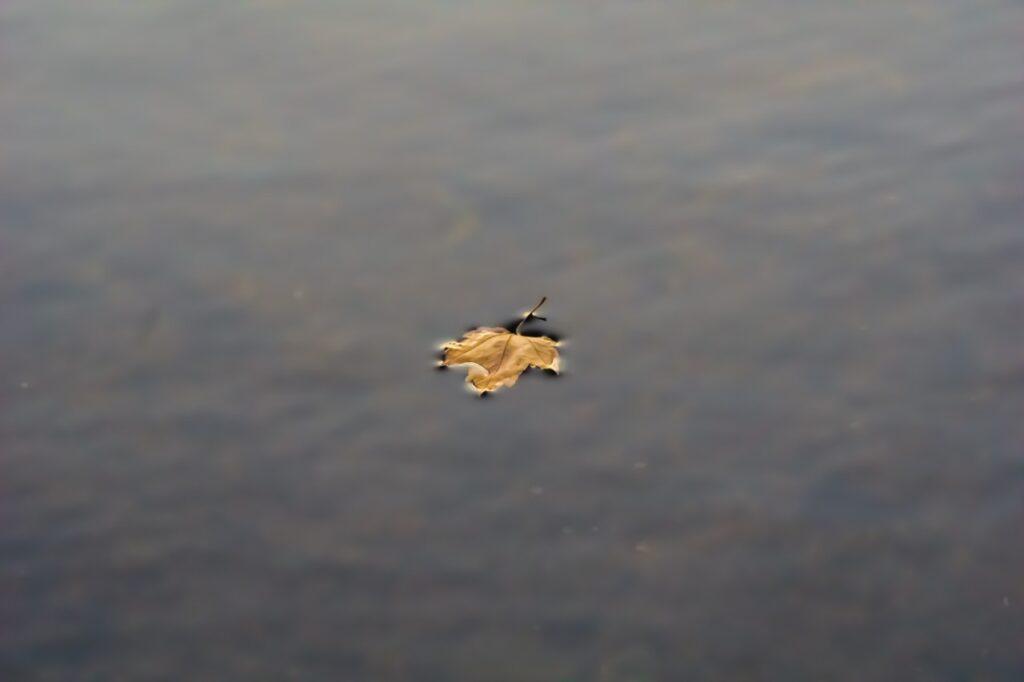 Feuille d'automne sur un lac limpide illustrant l'état méditatif dans cet article sur comment méditer.