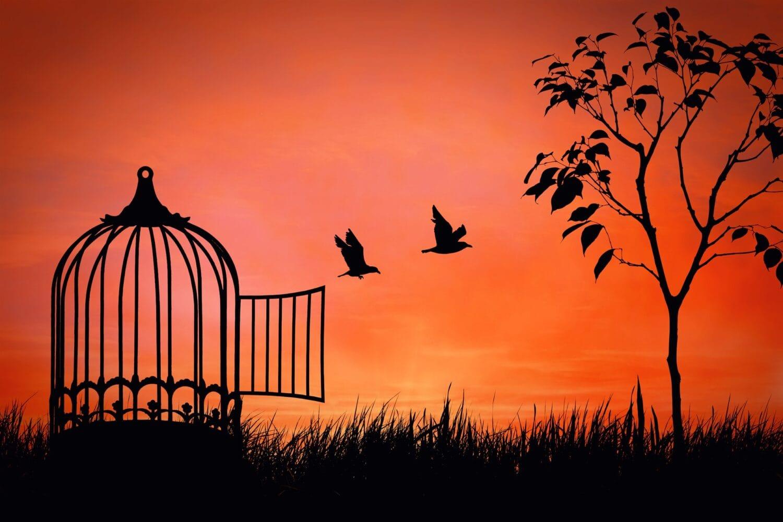 Des oiseaux s'envolent d'une cage. Image qui représente la liberté d'expression suite aux événements tragiques survenus en France.